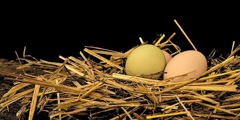Incubatrice uova, come funziona e come sceglierla